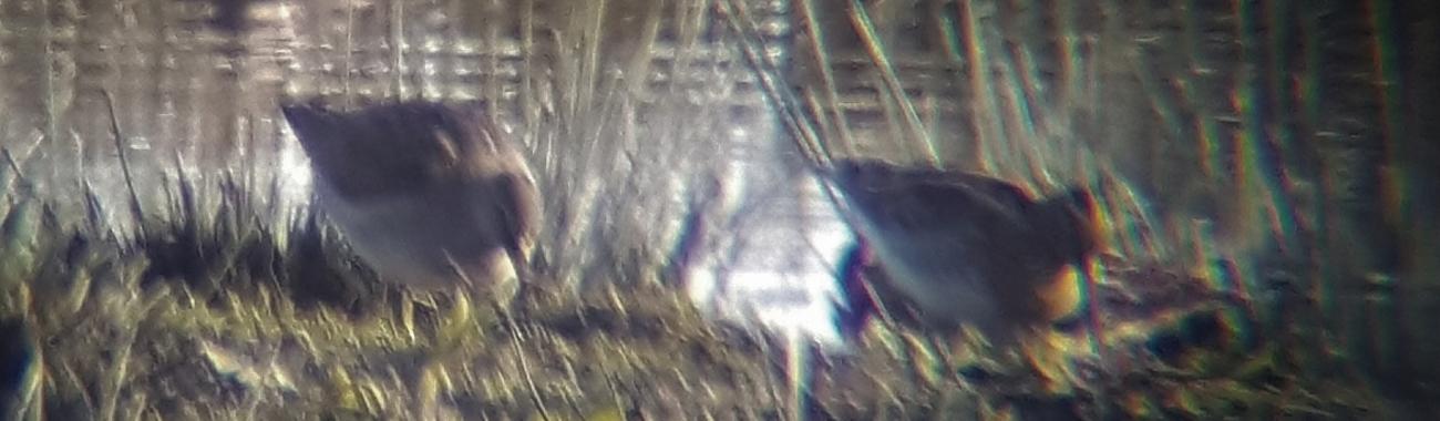 A blurred banner.full