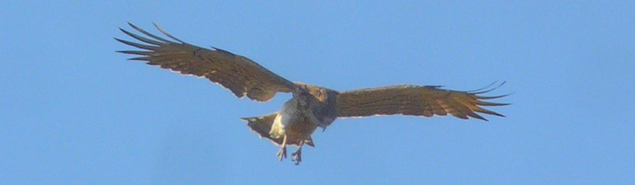 Banner eagle.full