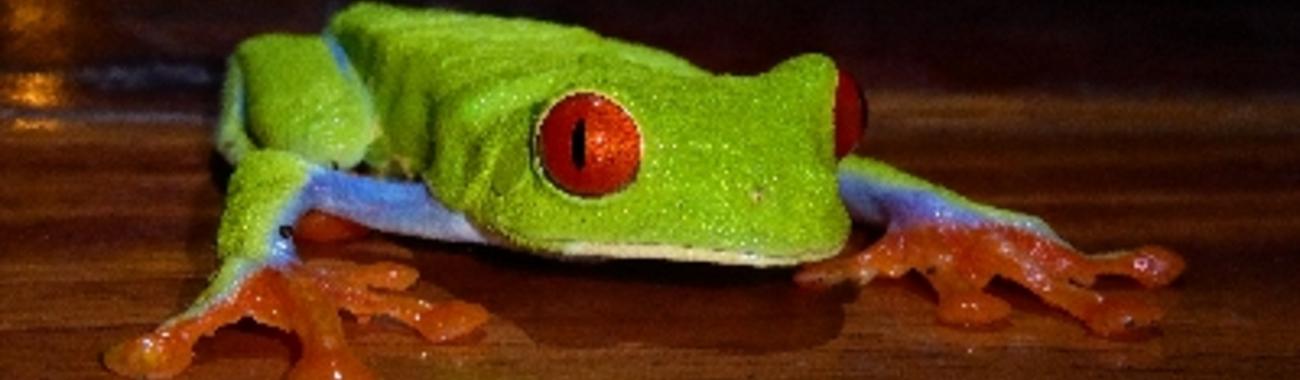 20 gaudy frog blog.full