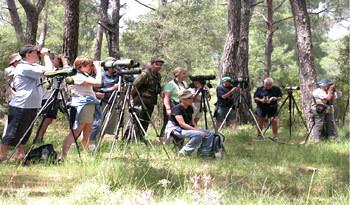 Achladeri Pine Woods